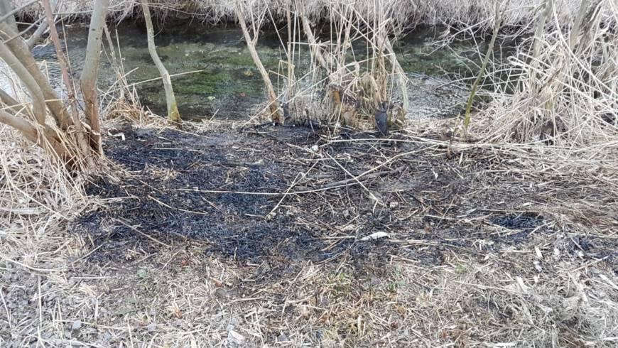 Brand Wiese – Bereich Feuerwehrhalle