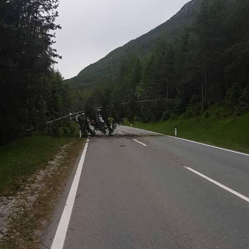 Mehrere umgestürzte Bäume